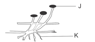 mammalian sex chromosome evolution theory in Arvada