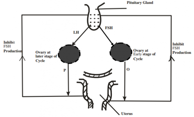 evaluation of progesterone and estrogen biology essay Menstruation: menstruation  progesterone is believed to inhibit the further output of lh  amenorrhea requires a thorough evaluation for possible organic.