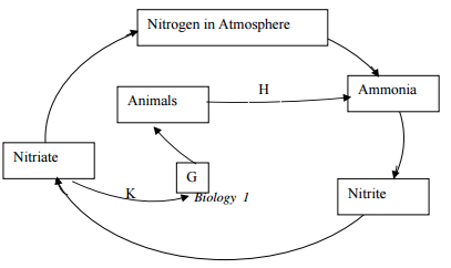 Biology Paper 1 Question Paper - 2016 Pre KCSE, Free 2016